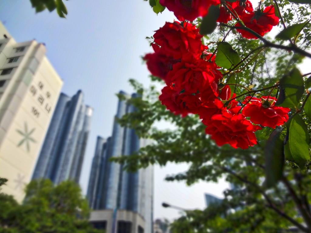 Busan Flowers near Park Hyatt