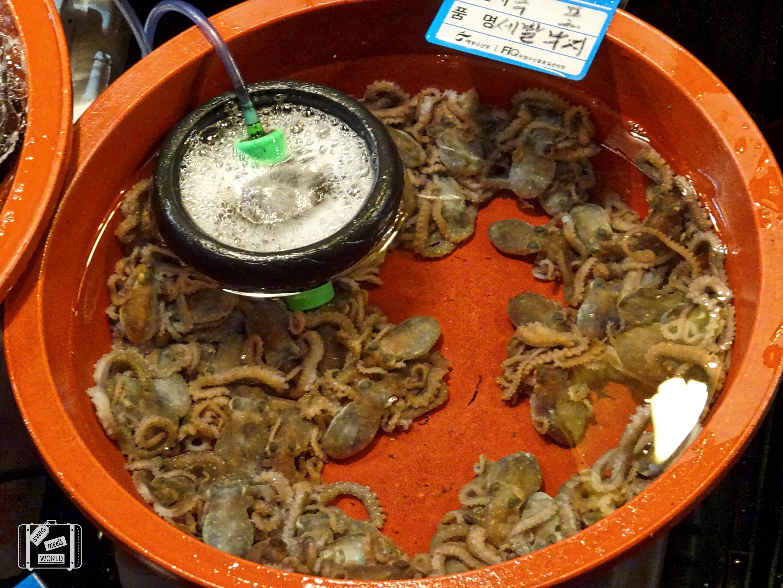 exploring noryangjin fish market seoul